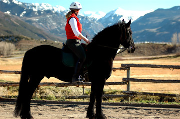 friesian equestrienne