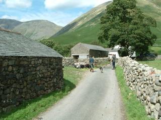 sheep round up