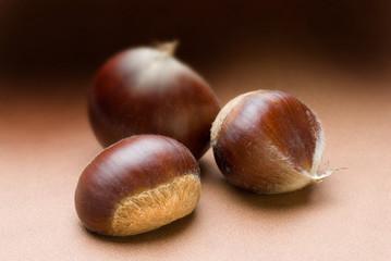 chestnut trio on brown tone background