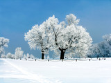 Fototapety russian winter