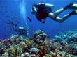 diving - 1634365