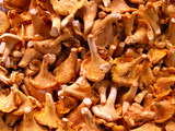 grocery store - chanterelle mushrooms poster