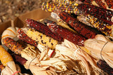 holiday corn crop poster