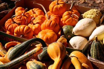 basket of holiday pumpkins and squash