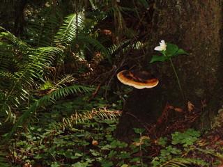 mushroom and trillium