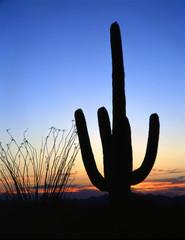 saguarocactussilhouette#2