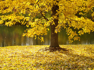 tree along river in fall