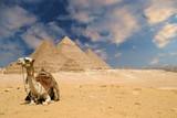 the pyramids camel-