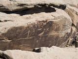 puerco indian ruin petroglyphs poster