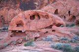 dinosaur skull poster