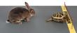 tortoise-hare - 1659930