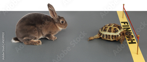 Papiers peints Tortue tortoise-hare