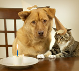 dog and cat celebrating birthday poster