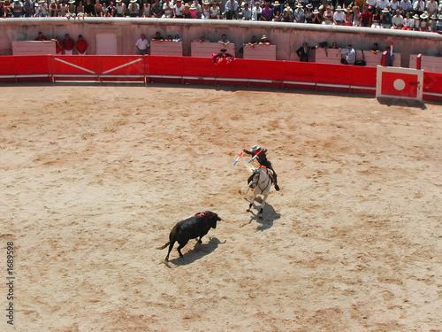 corrida à cheval lors de la feria de nimes