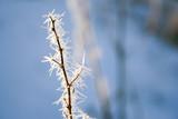 frozen branch poster