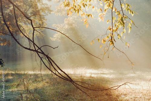 morning sun rays © nTripp