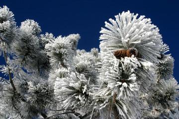 pine cones 6