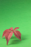 red leaf in portrait orientation poster