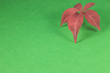 red leaf  in landscape orientation poster