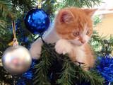 the christmas kitten poster