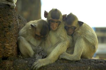 monkey-11