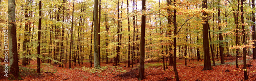 canvas print picture herbstwaldpanorama