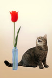 cat and flower poster
