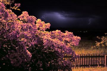 tempête pour les roses du jardin