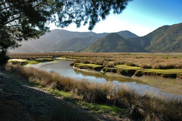 pelorus river marshland