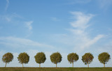 background of tree alley and blue sky poster
