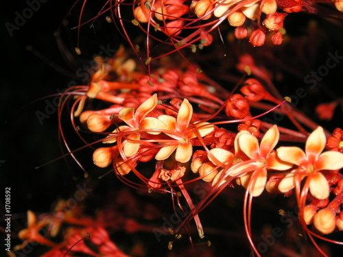 close up red flowers with long stamens