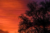 orange and purple sunrise background with trees poster