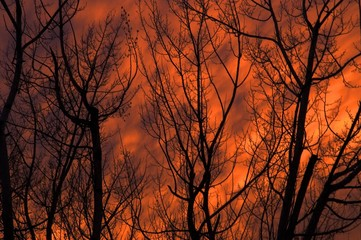abstract orange sunset and trees background