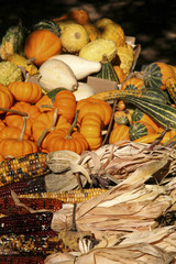 holiday corn and pumpkins