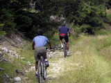 father and son cycling on mountain bikes on trail poster