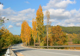 route en automne poster