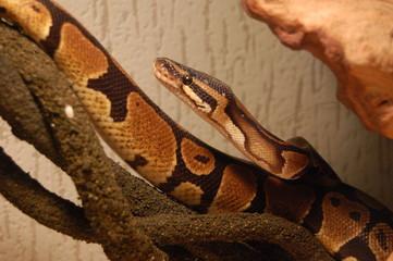 serpent3