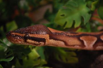 serpent7