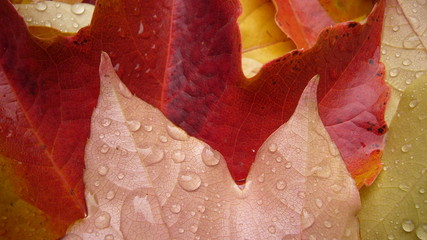 pics de feuilles d'automne