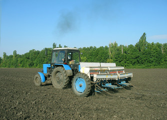 the tractor processes the ground under crop.
