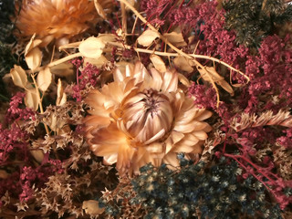 dried fall flora