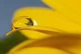 Fototapeta odblask - żółty - Odbicie i Lustro