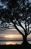 tree silhouette - sunrise poster