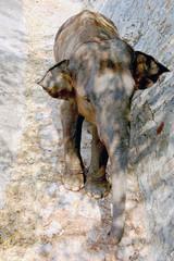 shade elephant