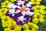 malaysia, pangkor island: flower composition poster