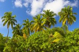 tropical forest on the island in indian ocean poster