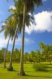 nice tropical park in indian ocean poster