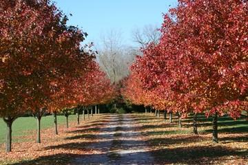 autumn beauty on a sunny day