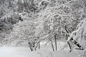 heavy snow iv