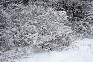 heavy snow vi